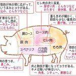 [日語教室]-豚什麼肉?