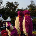 香港花展2012